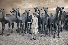 Nevada Wier - India. Rajasthan. Pushkar Fair. Camel Trader. 2010