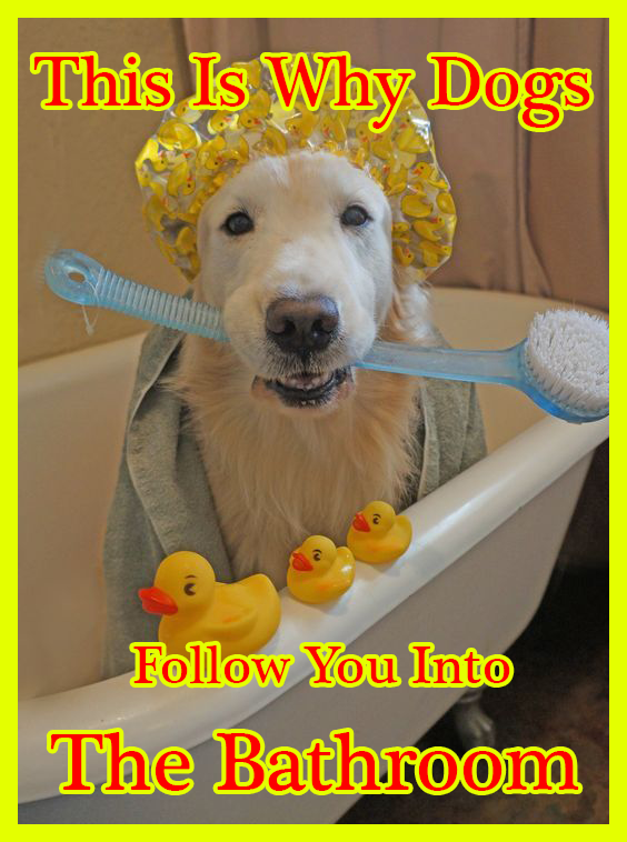 This Is Why Dogs Follow You Into The Bathroom I Never Knew This In 2020 Dogs Funny Animal Pictures Cute Puppies