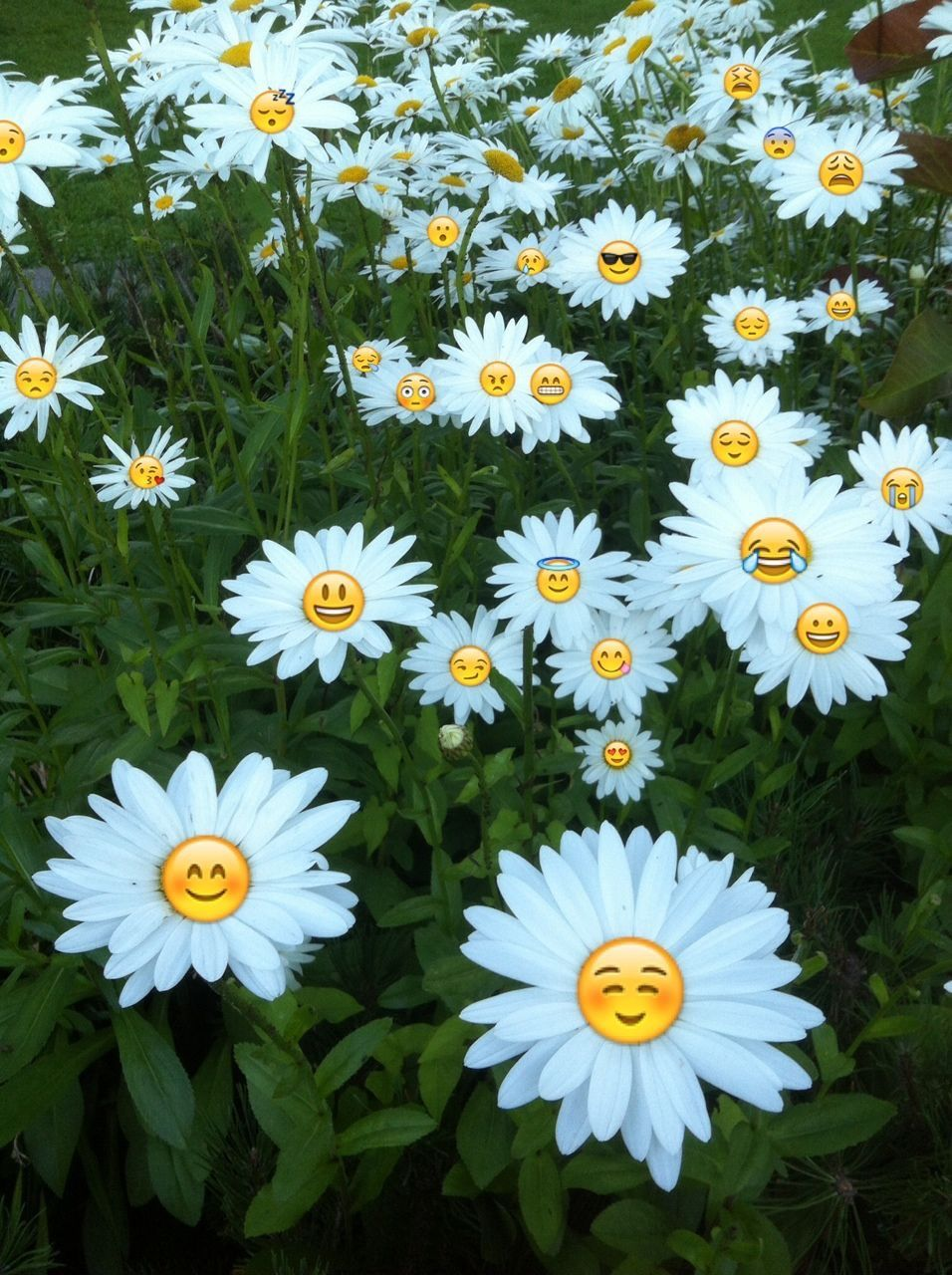 Pin by zehra on life pinterest explore emoji flower tumblr wallpaper and more izmirmasajfo