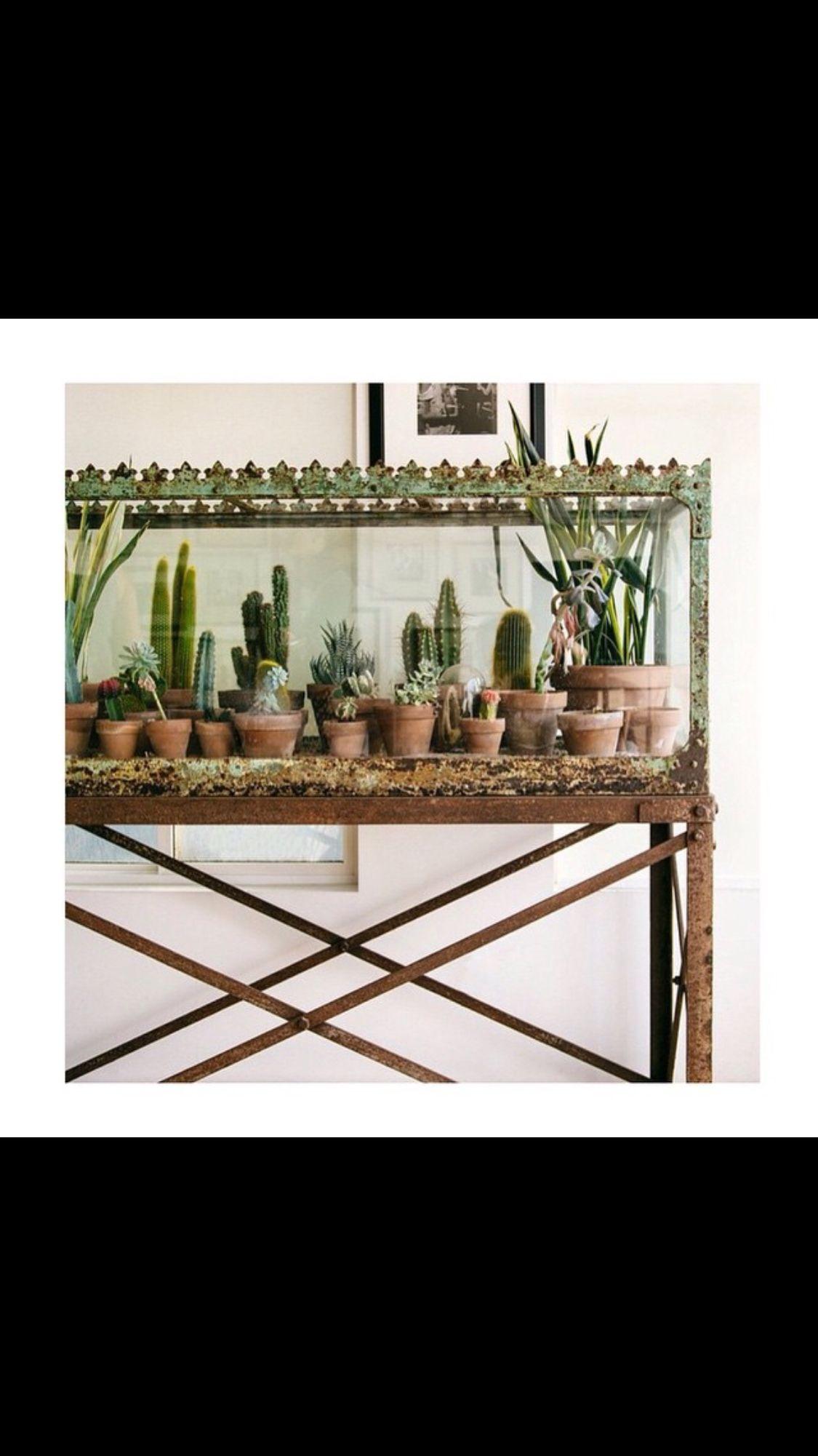Pin by truelove u co on flowers cacti u succulents pinterest
