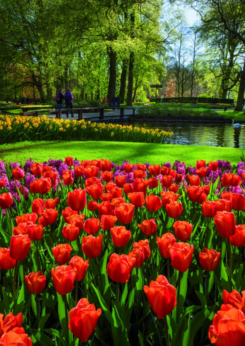 Maior parque de flores do mundo volta a abrir e colore a - Jardines de holanda ...