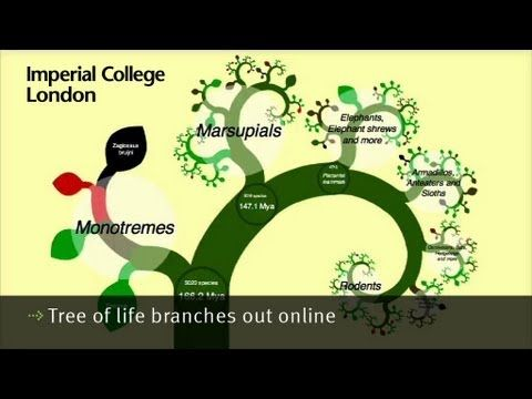 Tree of life branches out online - View the project and explore over 5000 species of wild mammals and see how they are related. onezoom.org, /Twitter @onezoomtree