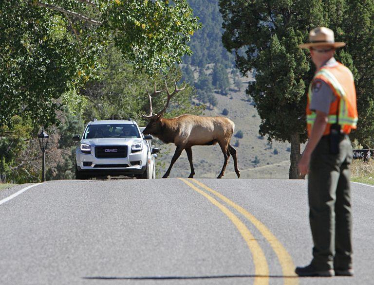 Pin on Working in Yellowstone