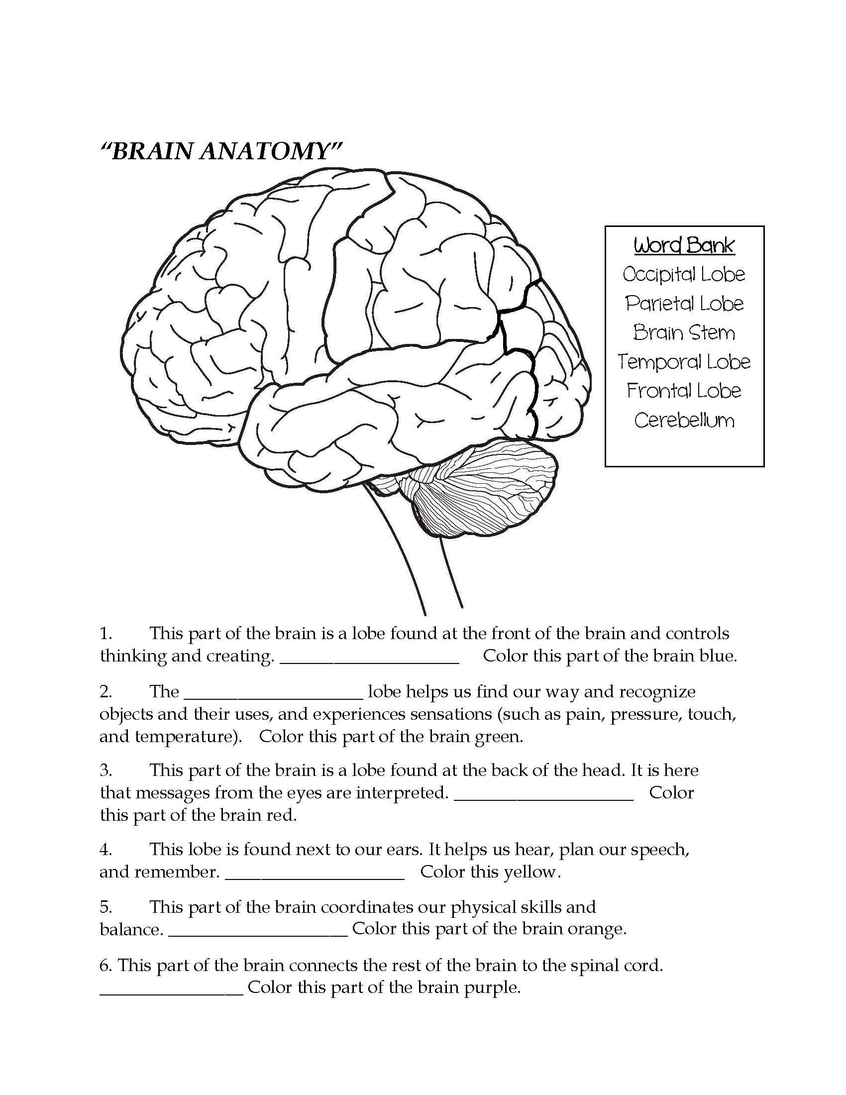 Brain Parts Fill In The Blank Color Teaching Middle School