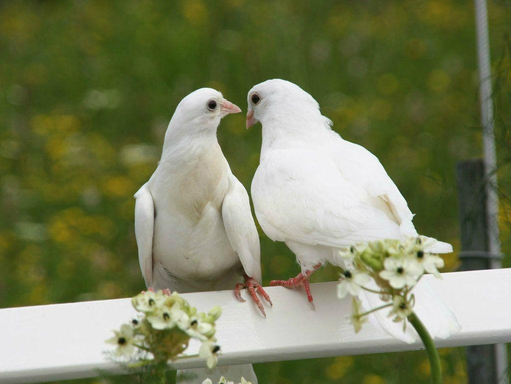 долгое время голуби любви фото зрительный зал растянулась
