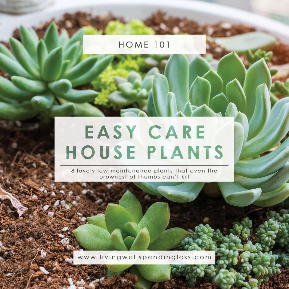 Low Maintenance Houseplants Easy Care House Plants Indoor Gardening Best Starter
