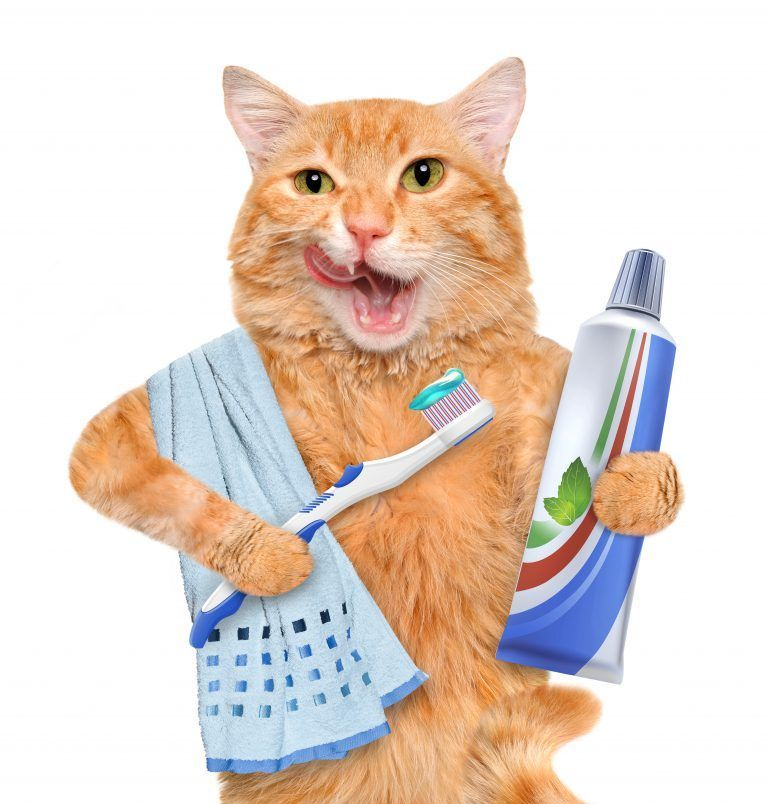 Pet Dental Care At Home Part 4 of 5 dentalcare As a pet