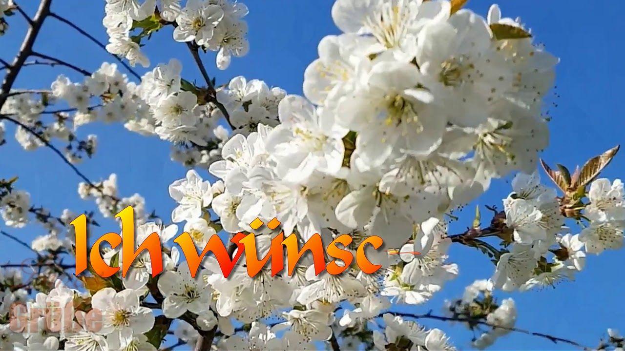 Grusse Zum 1 Mai Sonnige Maigrusse Fur Dich Grusse Grusse Zum 1 Mai Maifeiertag