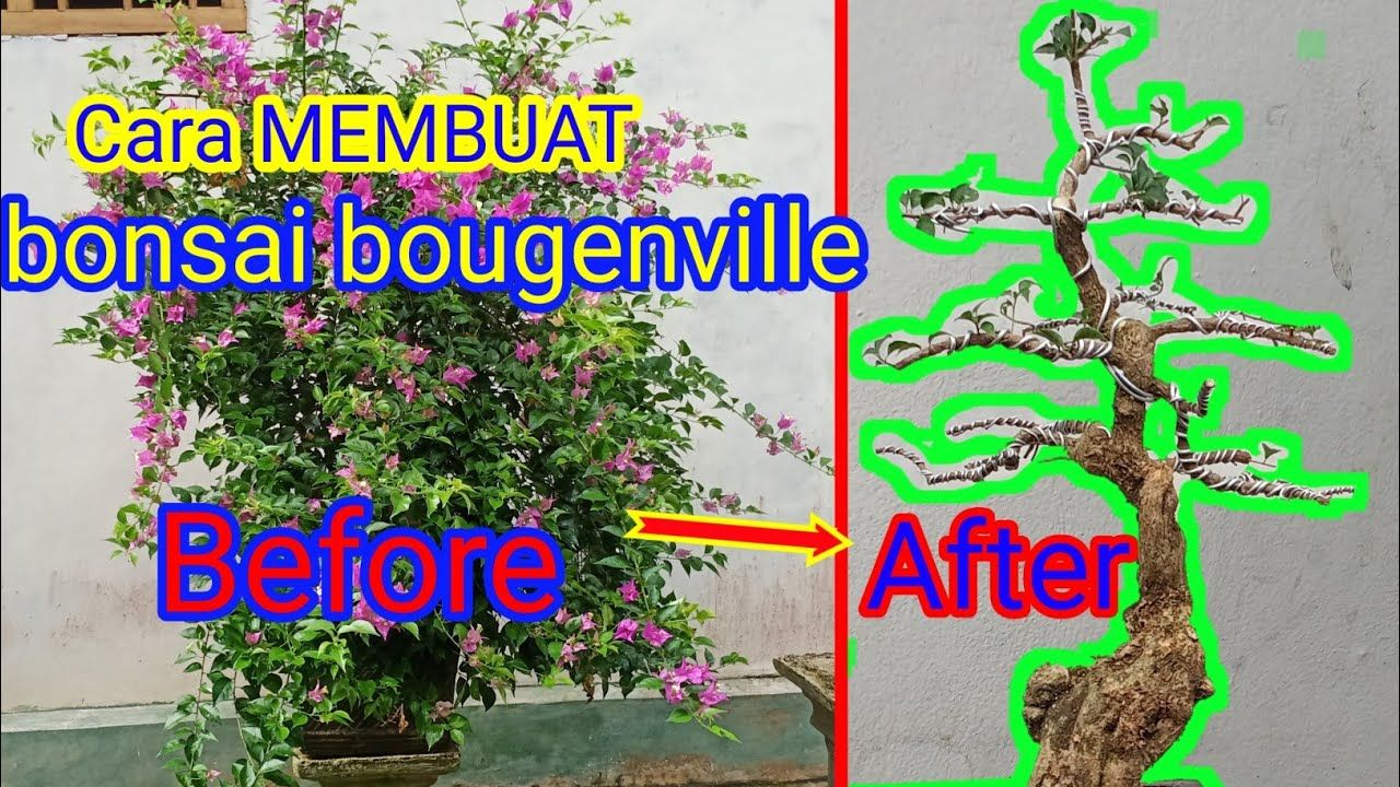Cara membuat BONSAI BOUGENVILE/BUNGA KERTAS YouTube di