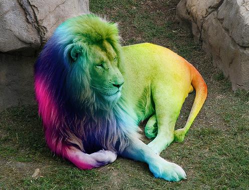 Rainbow Lion White Lion Black Lion Animals