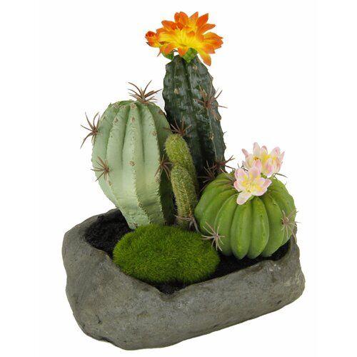The Seasonal Aisle <p></p><strong>Features:</strong><ul><li>Kakteen-Arrangement</li><li>Material (Stein): Kunststoff</li><li>Ideal für den Bad- und Wellnessbereich</li><li>Auf Stein</li><li>Pflanzenkategorie: Sukkulente</li><li>Pflanzenart: Kaktus<ul><li>Details zur Pflanzenart: </li></ul></li><li>Positionierung: Tischpflanze;Boden</li><li>Farbe der Pflanze: Grün</li><li>Pflanzenmaterial: Kunststoff</li><li>Gestell inklusive: Ja<ul><li>Topffarbe: Grau</li><li>Gestellmaterial: Plastik</li><li>Beh