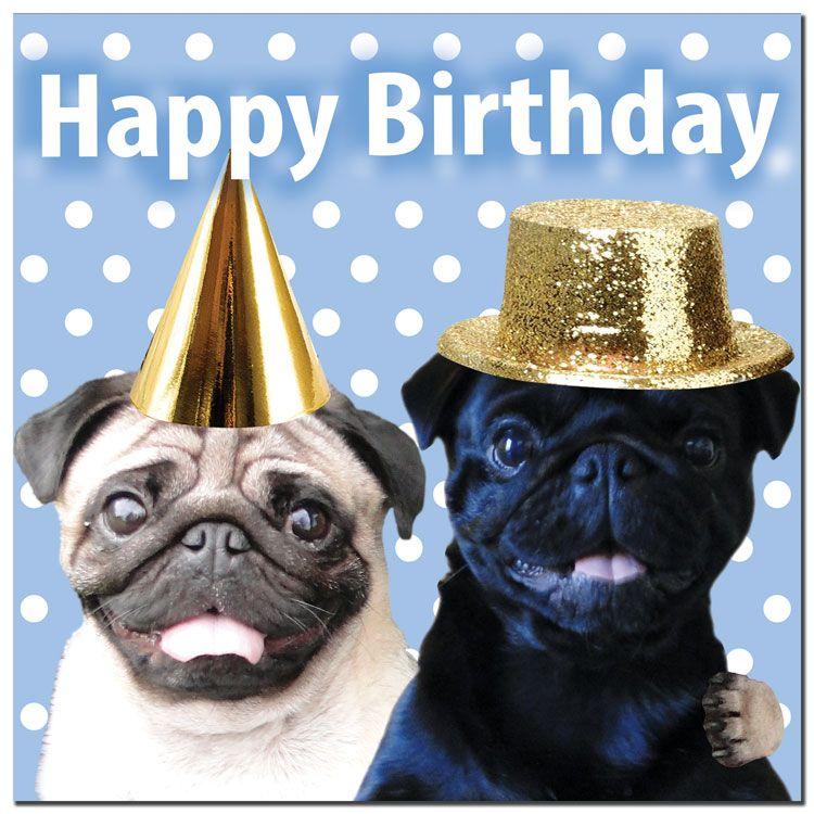 Happy Birthday Funny Pug Happy Birthday Pictures Images Pics Happy Birthday Fun Birthday Pug Birthday Humor
