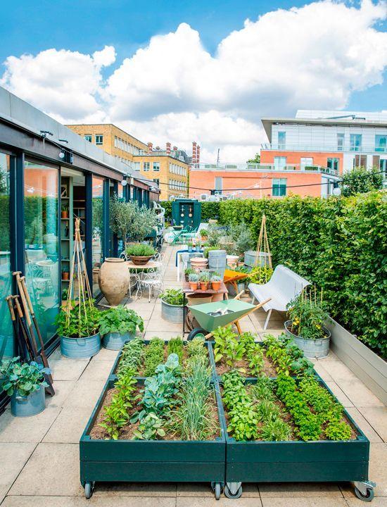 Veggie-Dachgarten mit einem Gewächshaus Urban Garden Pinterest