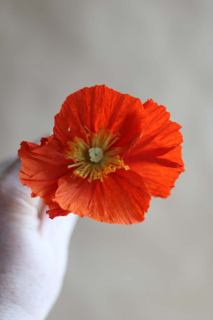 Paper poppy tutorial by kate alarcn for designsponge paper paper craft jeuxipadfo Choice Image