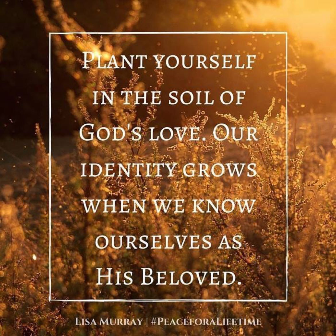 Plant Yourself In The Soil Of God S Love Our Identity Grows When We Know Ourselves As His Beloved Gods Love Inspirational Memes God