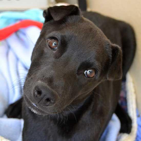 Adopt A Pet Dog Adoption Pet Adoption Animals