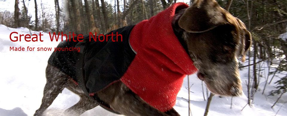 Chilly Dog Coats. These are the best coats ever. They fit ...
