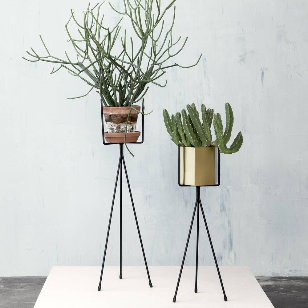 Tendance Les Plantes Prennent De La Hauteur Elle Decoration