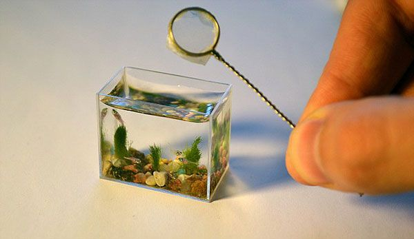It's Real Fish! O.O The World's smallest aquarium. When I saw this I almost crapped myself. It's THAT cute.