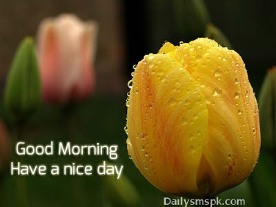 Following is the sweet good morning sms and lovely good morning quotes in Hindi and Urdu for your husband, friend, fb status, tweet, fiance.