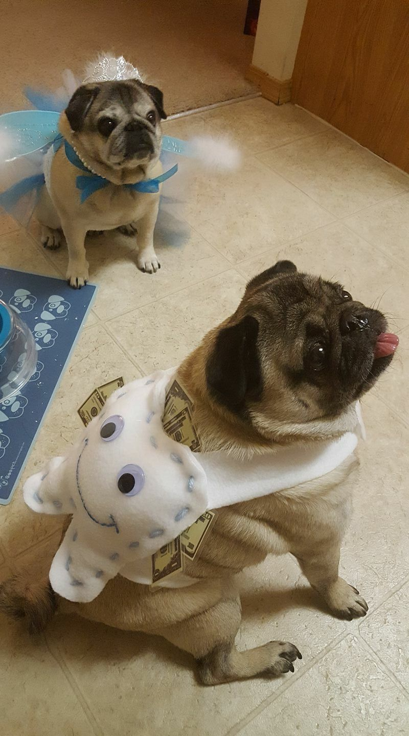 Tooth And Tooth Fairy Halloween Dog Costumes Dog Halloween