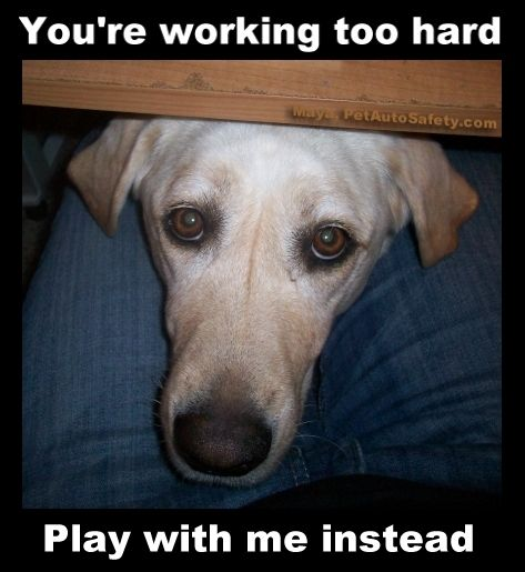 All My Dogs All The Time Dogmom Dogdad Dogs Dog Doglover Rescuedog Shelterdog Workaholic Dogs Cool Pets Dog Memes