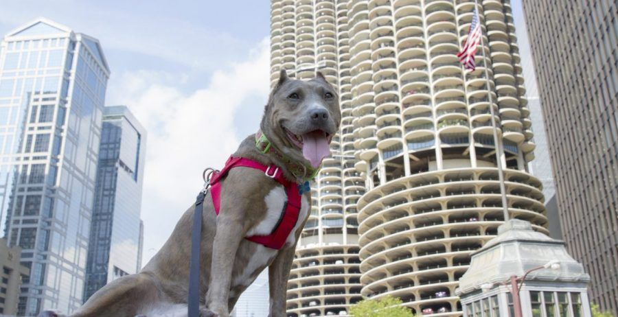 Chicago S Kinzie Hotel Launches Pamper Your Pooch Package Kinzie