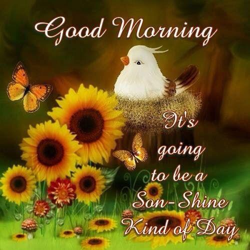 Good Morning Son Shine Good Morning Happy Sunday Good Morning Happy Good Morning Son