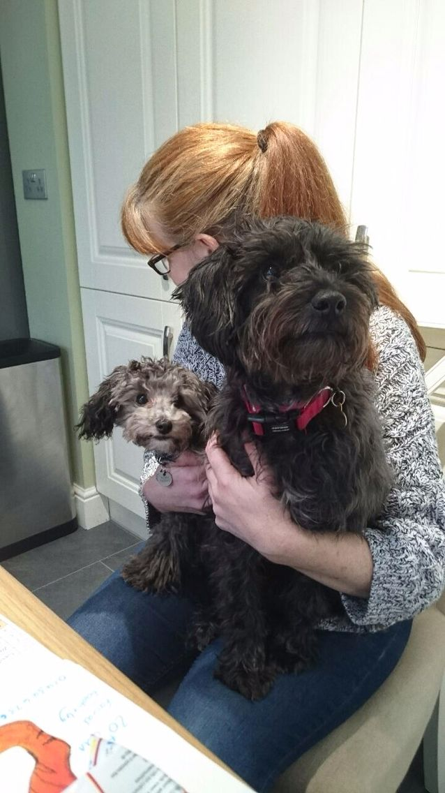 Rocky The Silver Toy Poodle And Buster A Poodle X Border Terrier