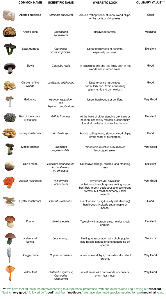 Mushrooms that can be found via foraging also stuffed rh pinterest