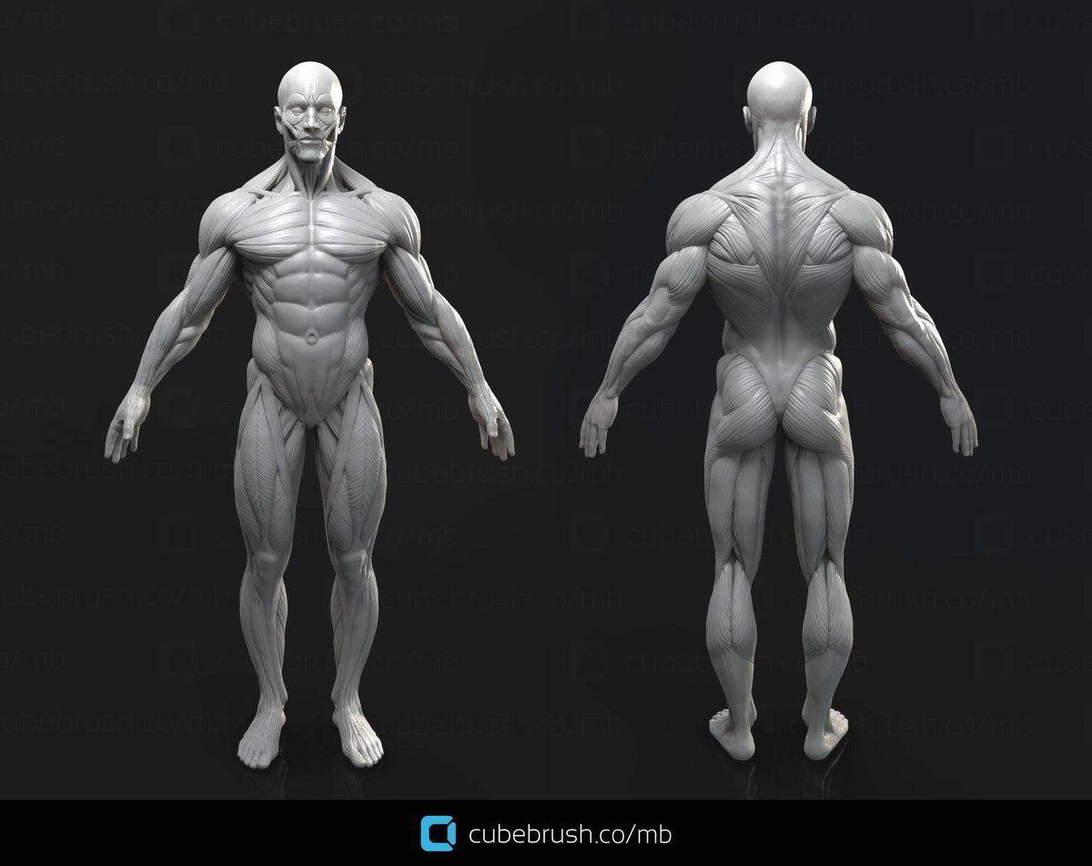 Mark Brunet\'s male anatomy reference model | Design | Pinterest ...