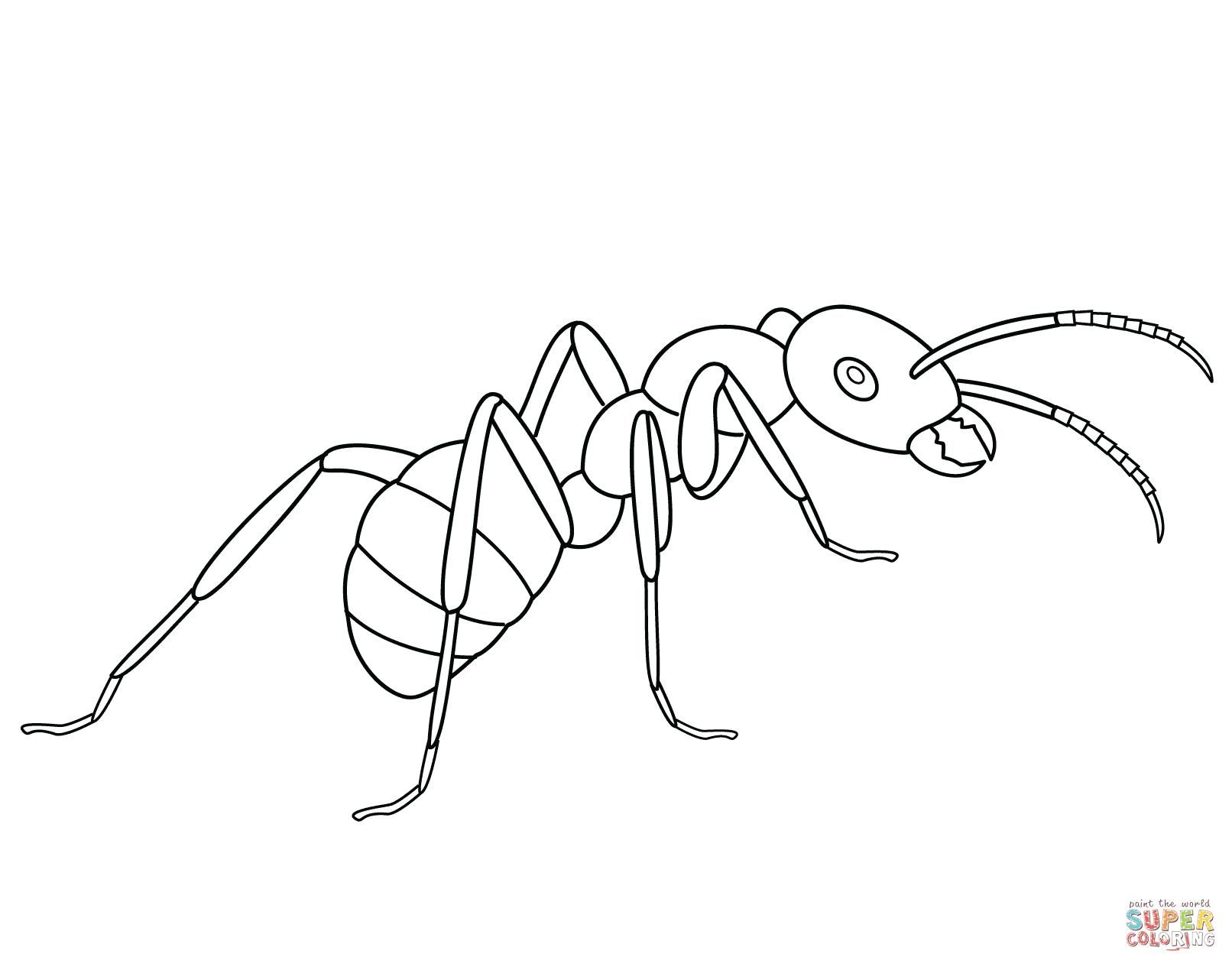 Coloring Page Ant Insect Coloring Pages Coloring Pages Ants Printable