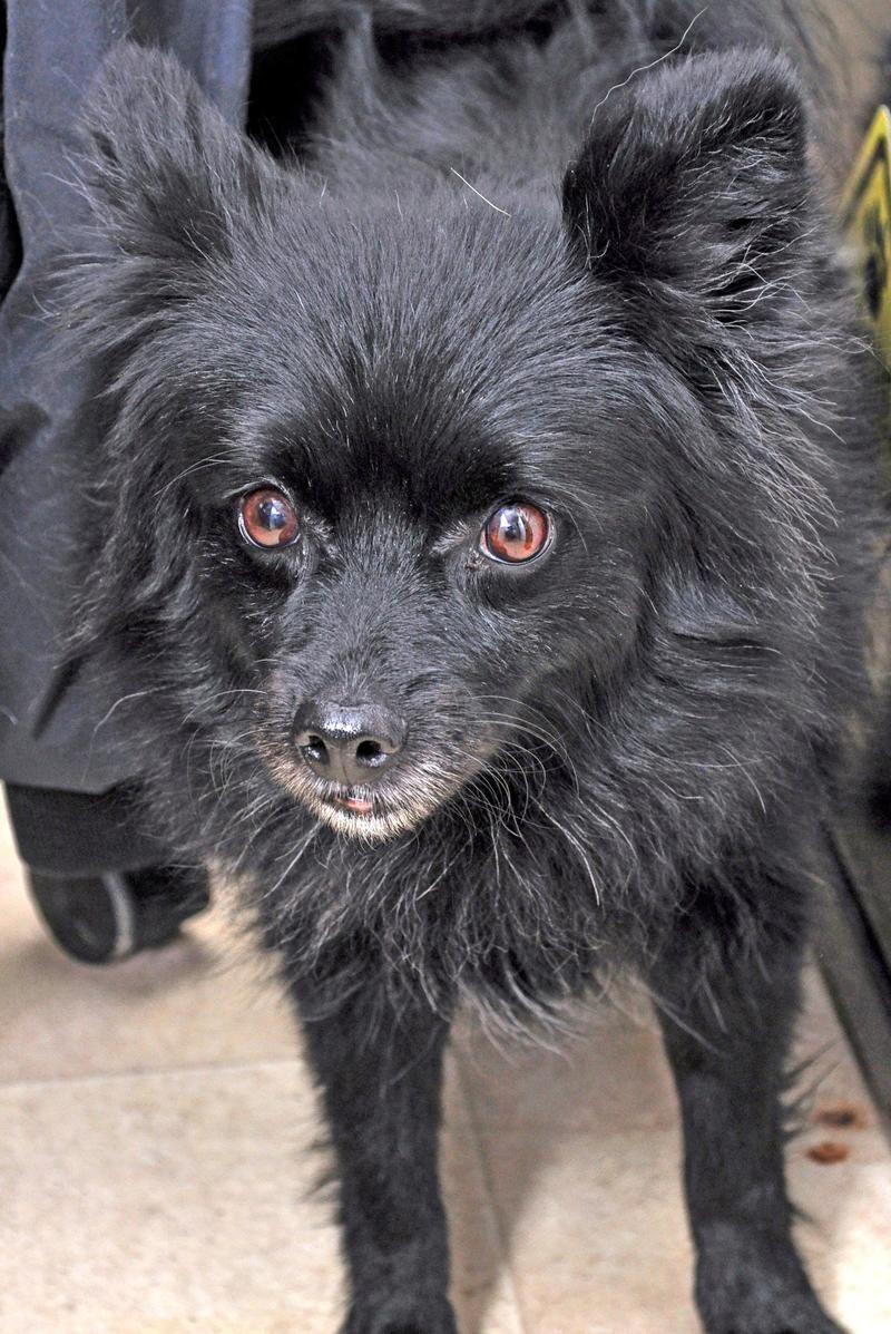 Adopt Cuddles 25 Adoption Fee On Animal Shelter Cuddling Shelter Dogs