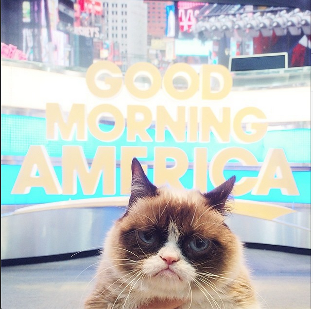 Grumpy Cat (Official) GoodMorningAmerica. No such thing