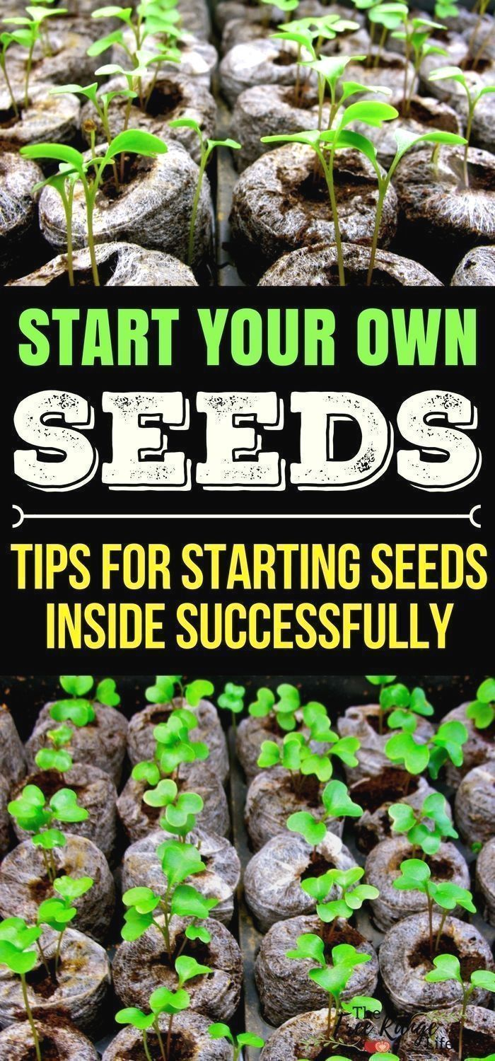 Gardening indoors learn how to start your own plants from seed for gardening indoors learn how to start your own plants from seed for your garden with these 5 seed starting tips vegetable gardening tips organ workwithnaturefo