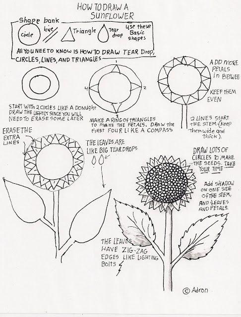 Comment dessiner un tournesol le on pour le jeune artiste - Comment dessiner un tournesol ...