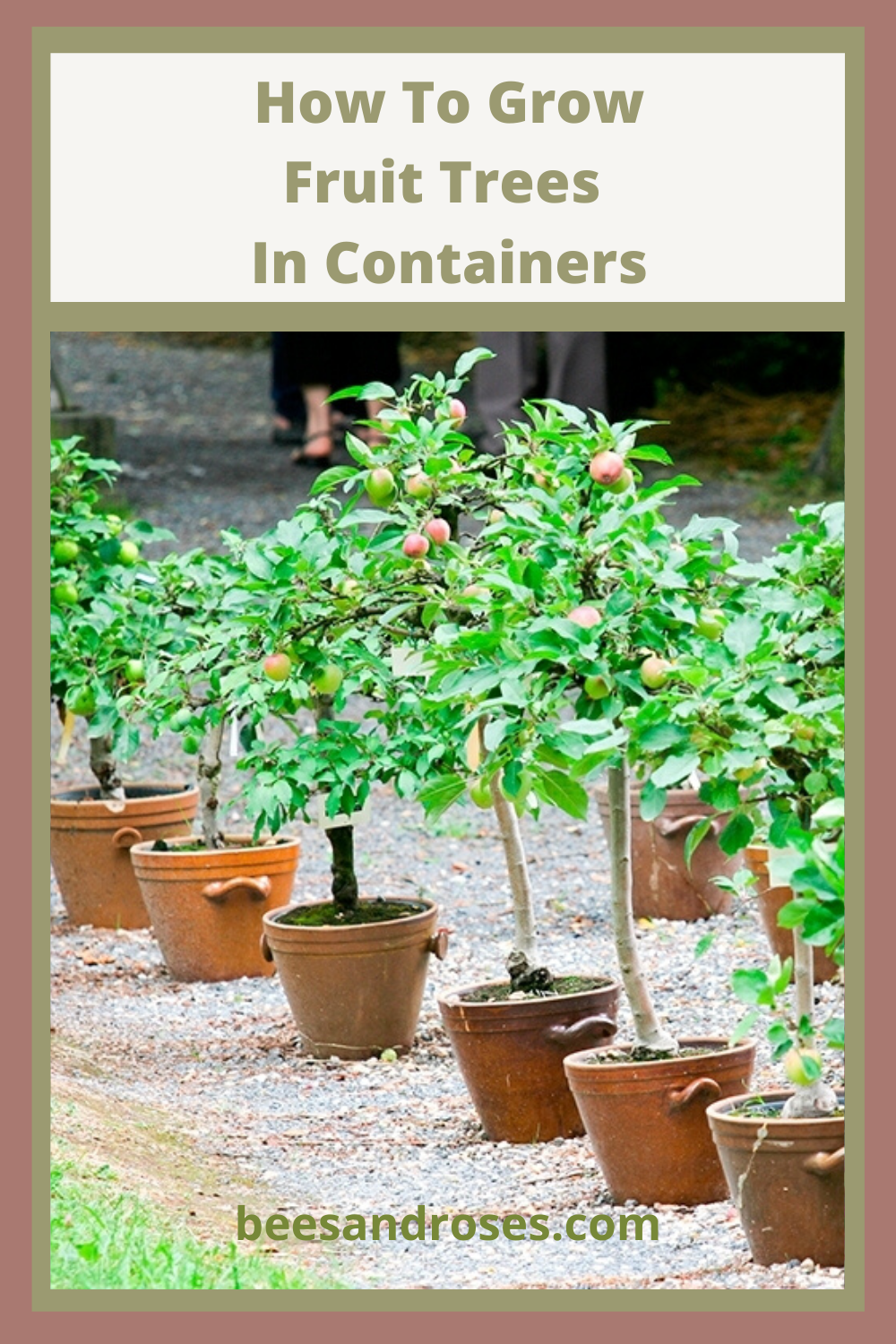 Tips And Tricks For Growing Fruit Trees In Containers Bees And Roses Fruit Trees In Containers Fruit Trees Planting Fruit Trees