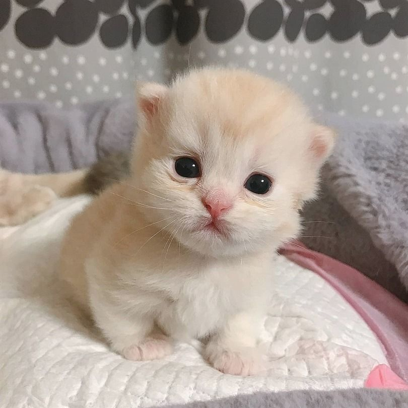 I Love Cute Cats And Kittens Cuz They Bring Me Happiness Cute Cats