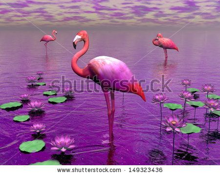 Flamingo Stock Photos, Flamingo Stock Photography, Flamingo Stock Images : Shutterstock.com