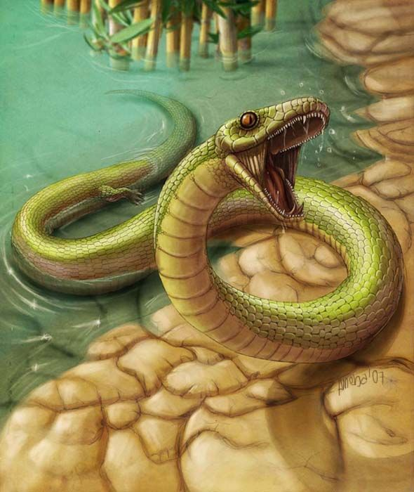 NajashA Cretaceous basal snake, which grew to up to 5 feet long - what is presumed
