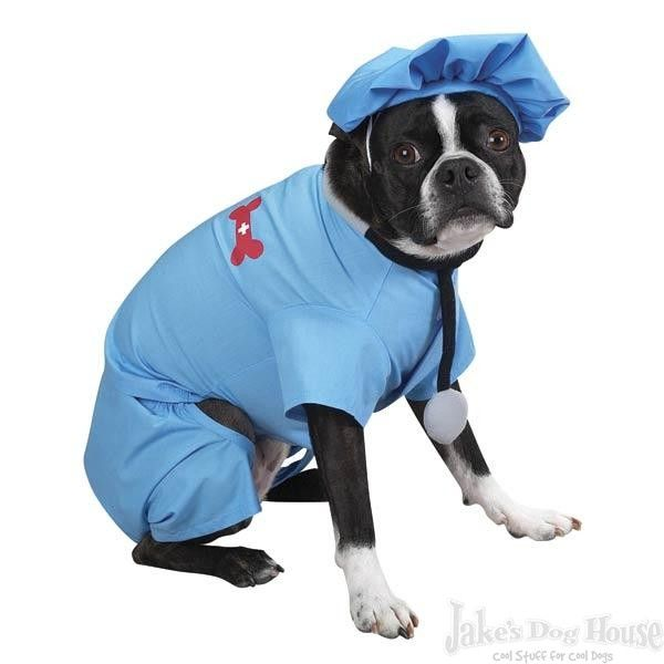 Scrubs Costume For Dogs Dog Halloween Costumes Dog Halloween