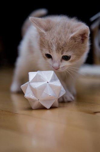 I Am Not A Present Meeew Fancy Cats Worlds Cutest Animals Cats