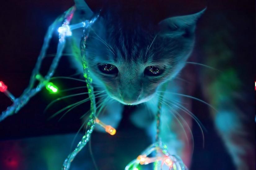 Anime Cat Animals Lights Christmas Lights Wallpaper Hd Christmas Cats Cats Cat Wallpaper