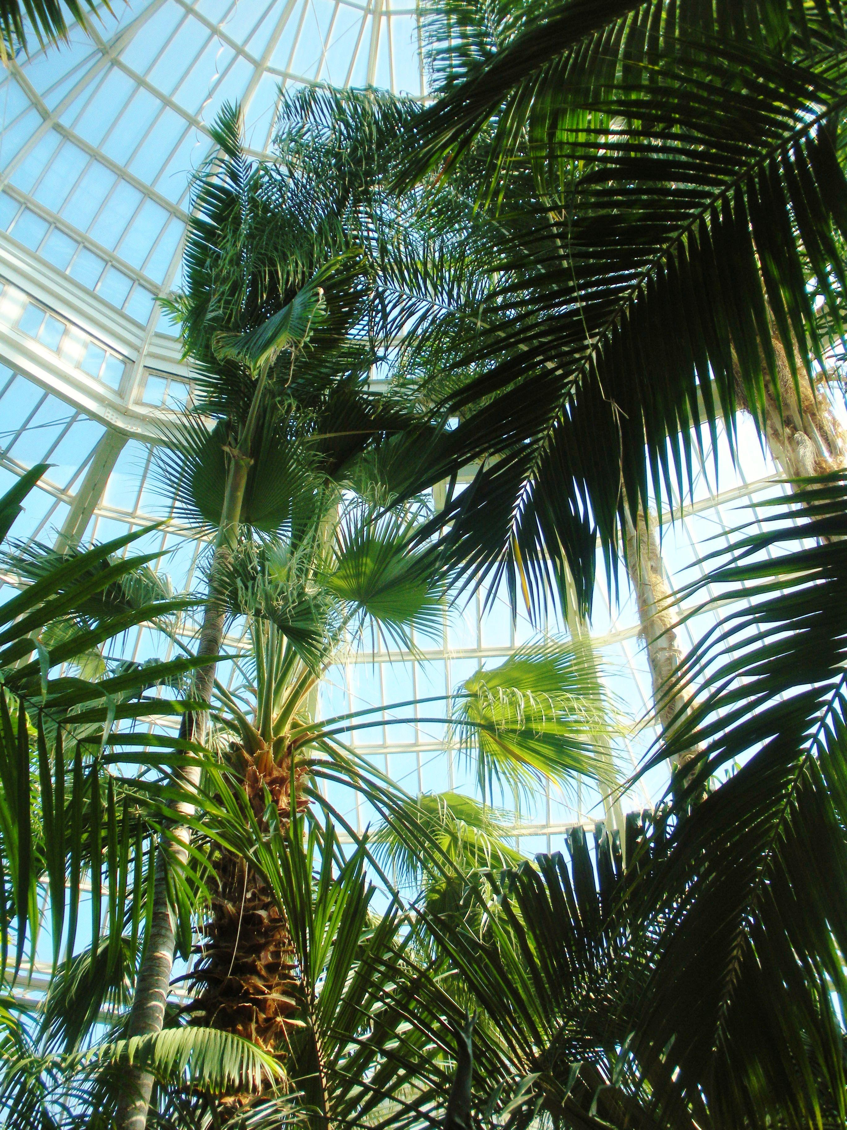 Como Zoo Conservatory Como Zoo Planting Flowers California Coast
