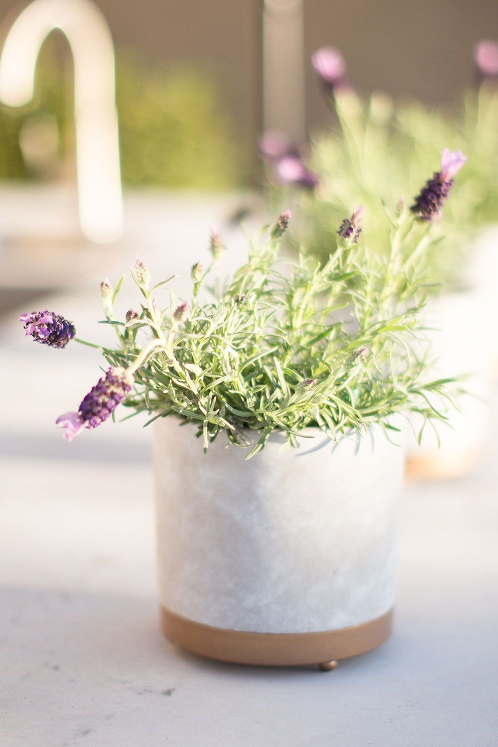 """6"""" Goldendale Planter. Via Just Destiny planter plants"""