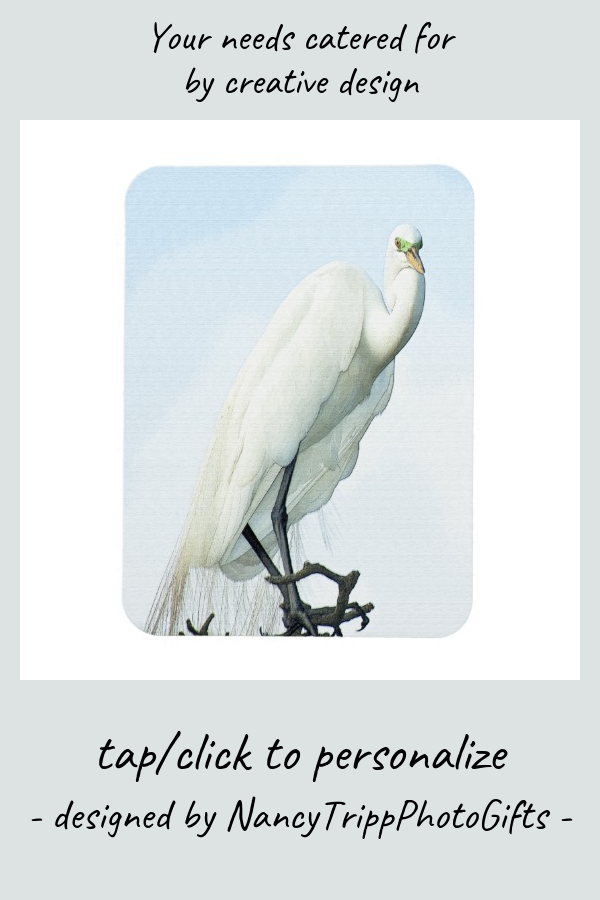 Great White Heron Portrait Magnet