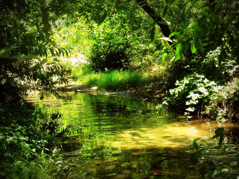 decor for rainforest - Google Search