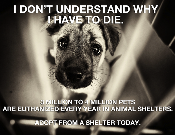 Animal Shelter Euthanasia Animal Shelter Animal Abuse Rescue Dogs