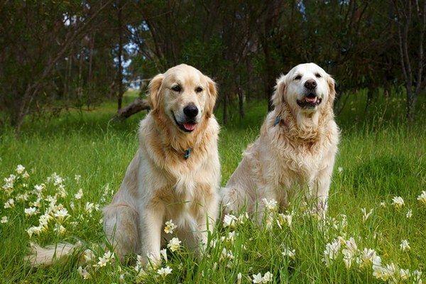 Dogs In Fowers Dogs In Flower Fields13 Dogs Enjoy In Flower Fields
