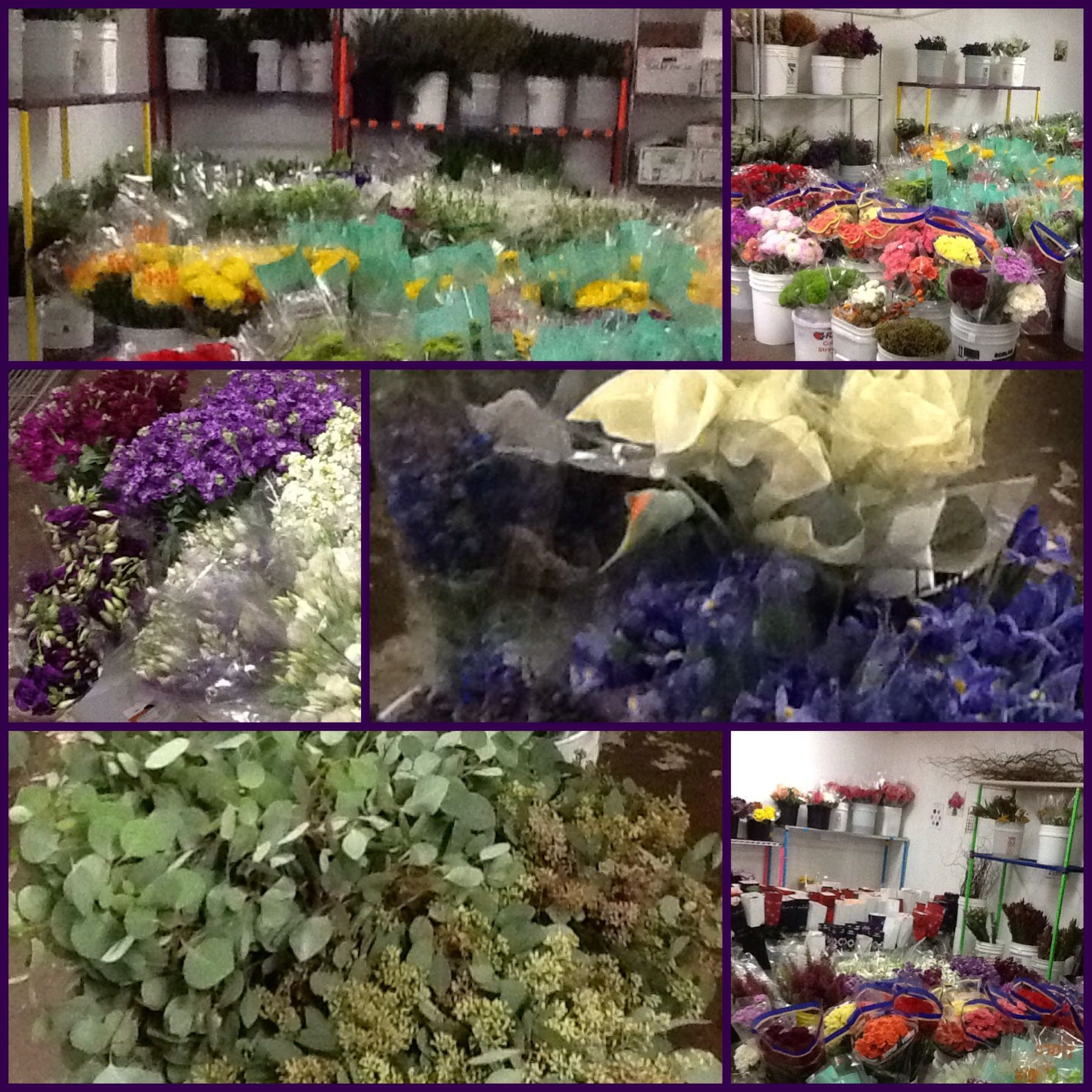 Cooler full with beautiful fresh flowers at wholesale